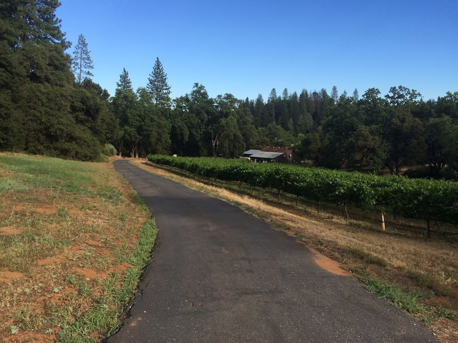 Local winery at bottom of driveway