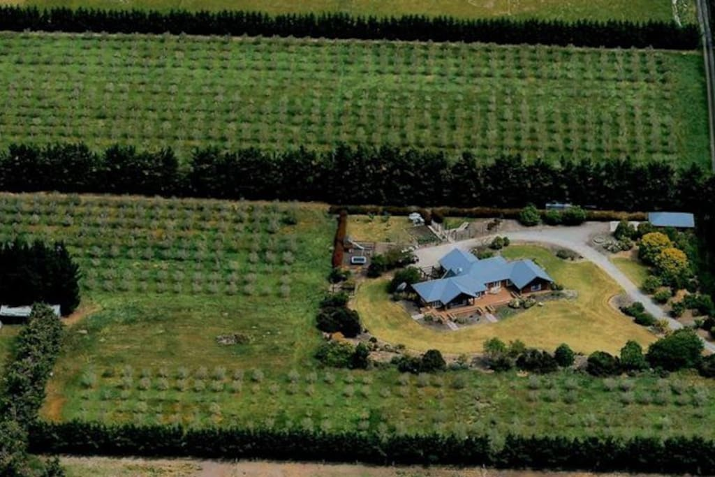 Aerial view of house and olive grove