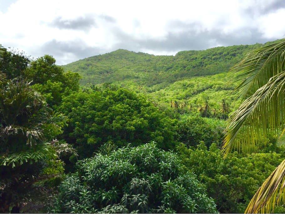View of Mamiku Ridge from balcony