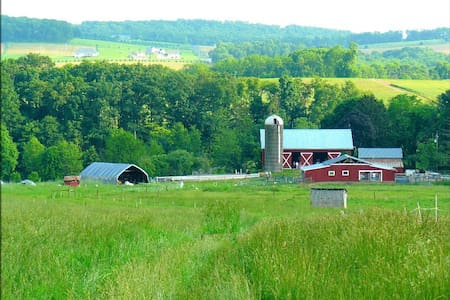 112-Acre Sheep Farm : Animals, Nature,  Scenery