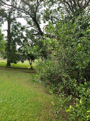 Árboles frutales.