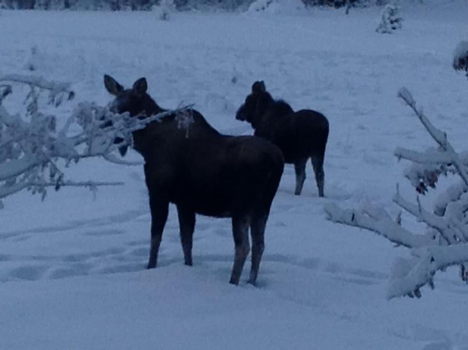 Winter guests
