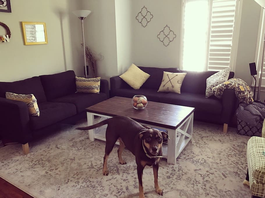 Living room upstairs with lots of natural light. (Dog not included)
