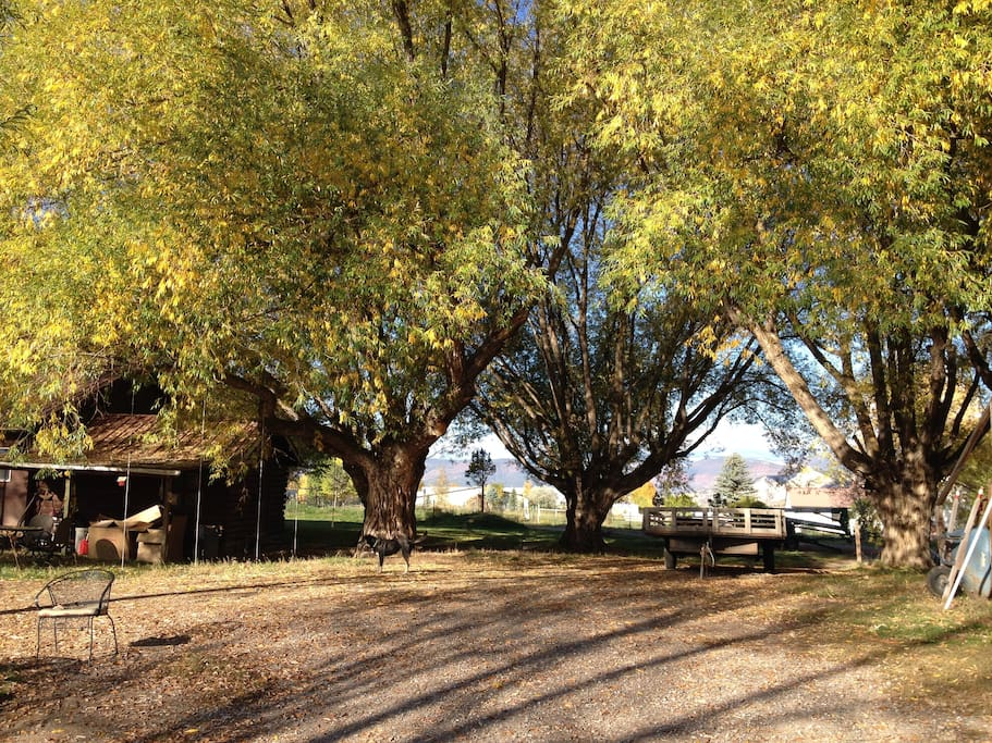 Biggest Trees in Eagle County by separate bunkhouse