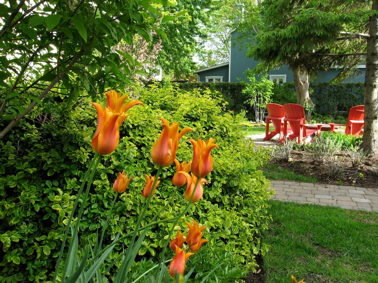 Spring time in the garden