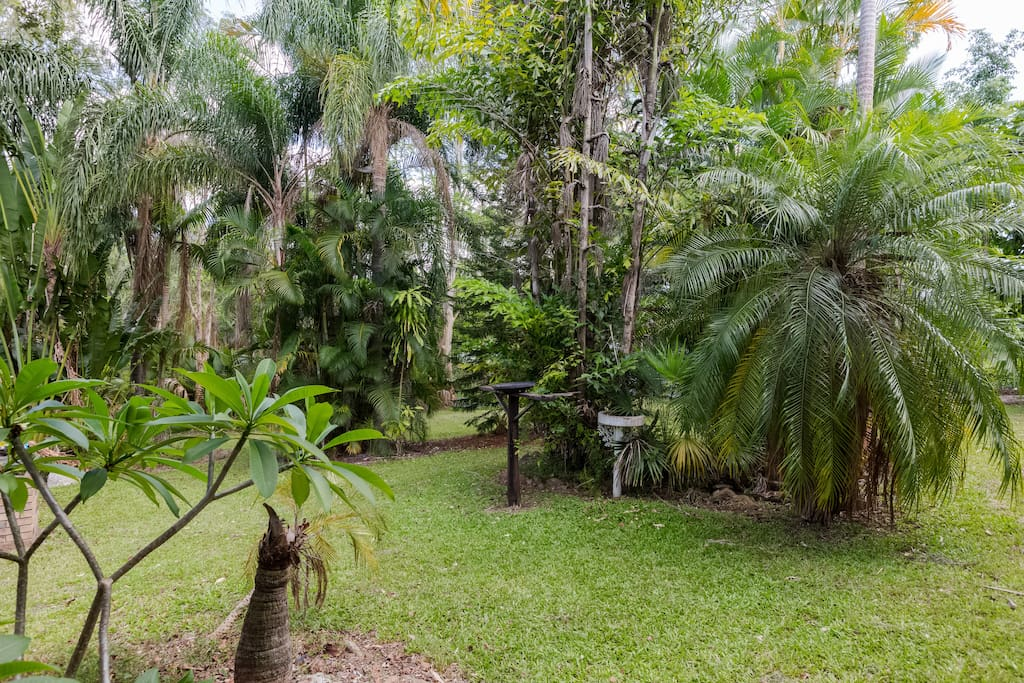 Tranquil tropical garden.