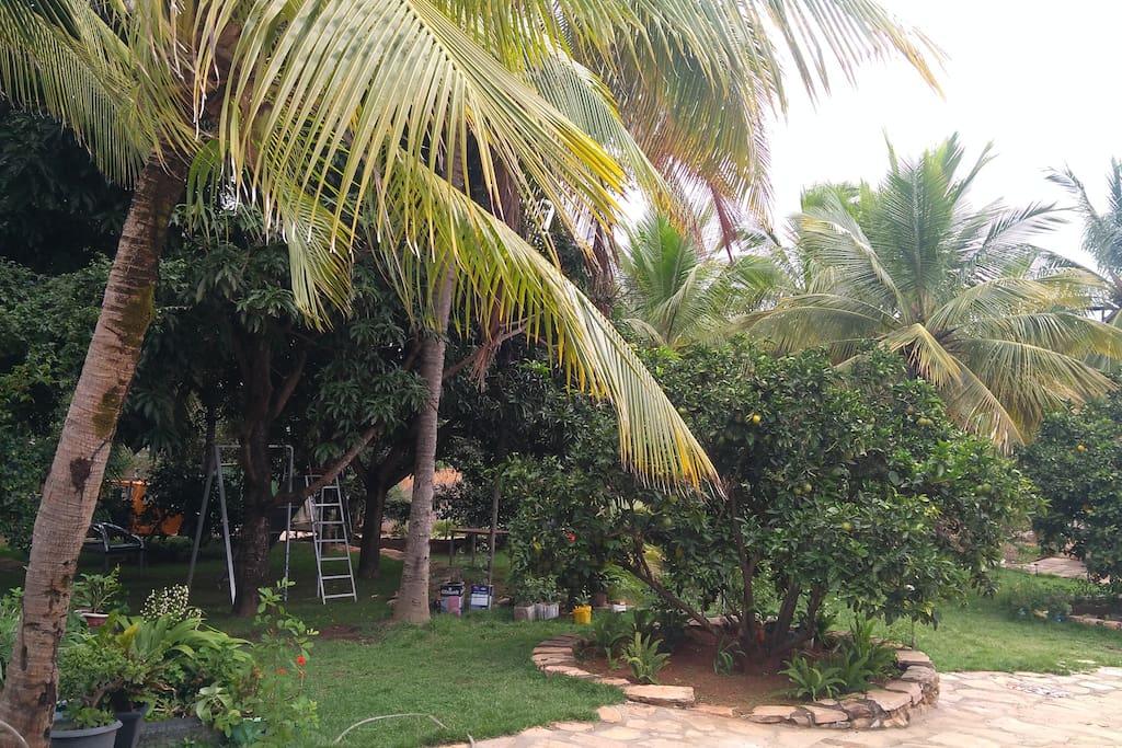 Jardim do sítio