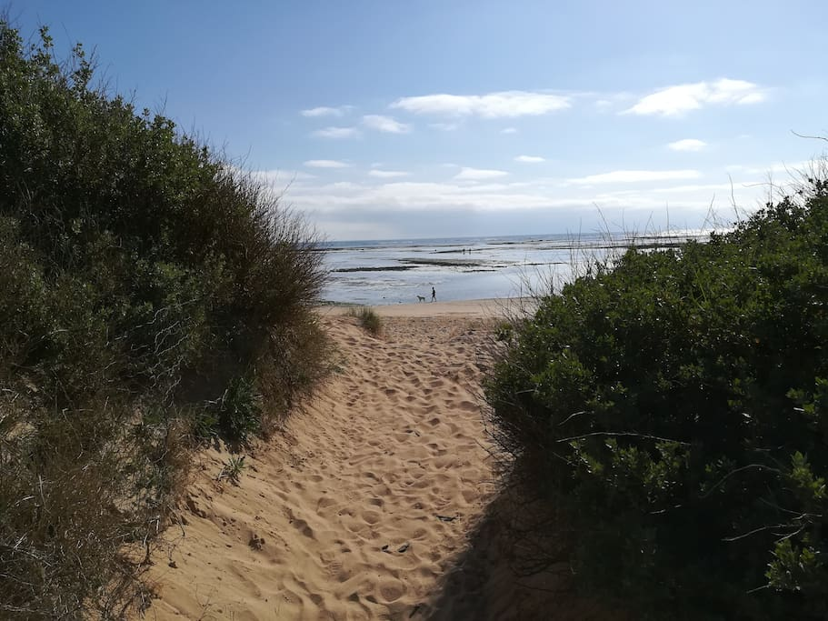 Les dunes et la plage de l'Ileau