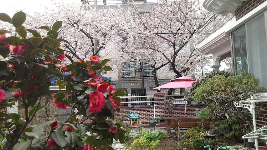 Cherry Blossom Atelier Garden House - Jinhae - Casa