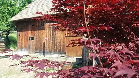 Pintea Cottage & Barn Accommodation  - Bucovina
