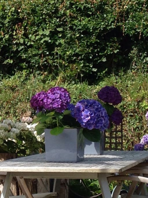 Jardin intérieur