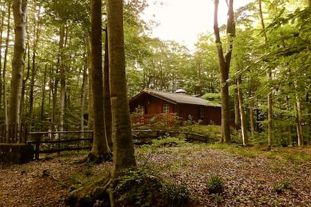 Meraviglioso Chalet/Stunning Chalet - Rifugio Amiatino - Sommerhus/hytte