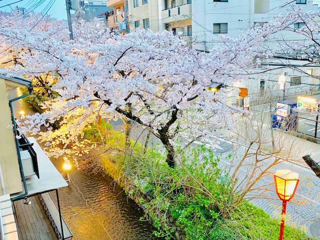 RiverView Traditional Flat in central Kyoto Gion 桜