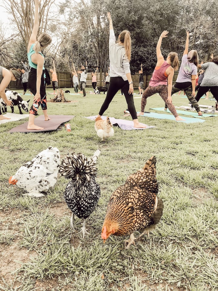 And chickens! So really its farm yoga!