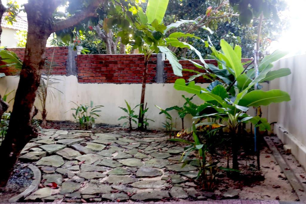 The Garden: banana trees.