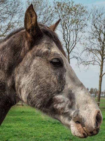 Dieren manieren op de `boerderij Tenesse Walking horse