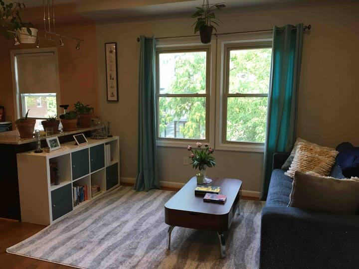 Sunny One Bedroom Apartment Near H St. Corridor