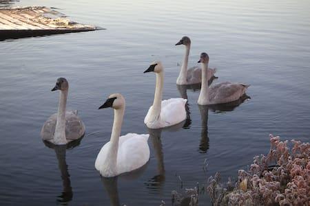 Big Lake Island Adventures - Big Lake