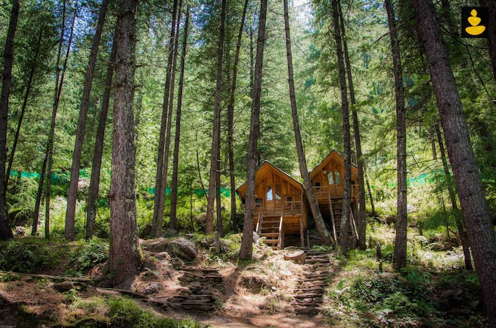 Treehouses | Adventure Huts | Group of 12