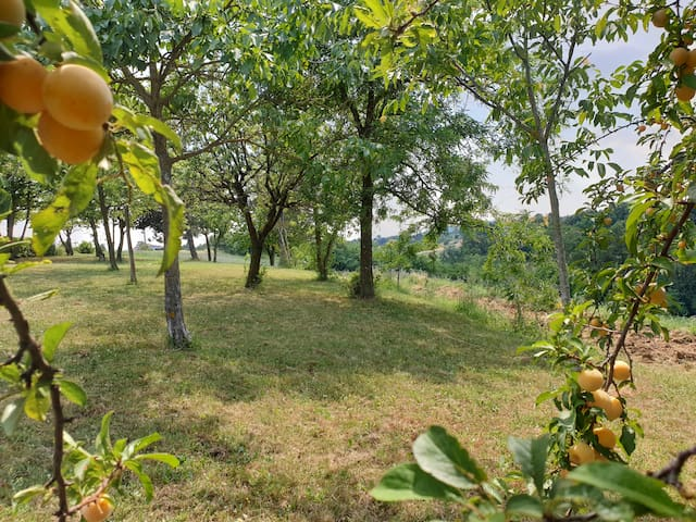 Prendi un frutto e gustalo ;-) -  Take a fruit and enjoy it ;-)