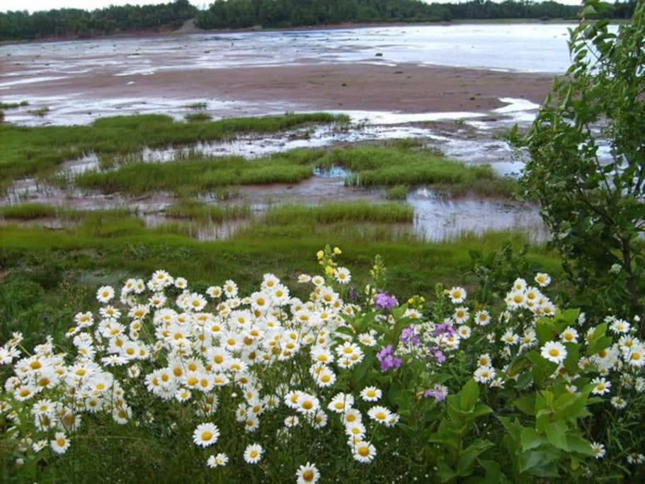 Tatamagouche Bay at low tide