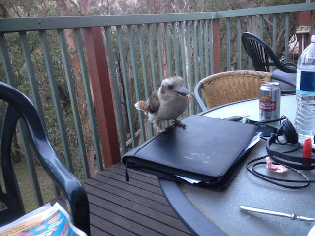 Another kookaburra sharing some food at the end of a days maintenance