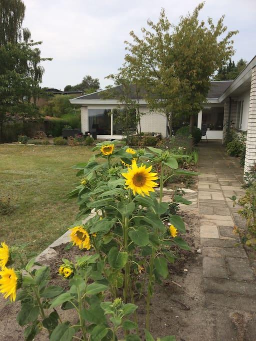 Skøn have
