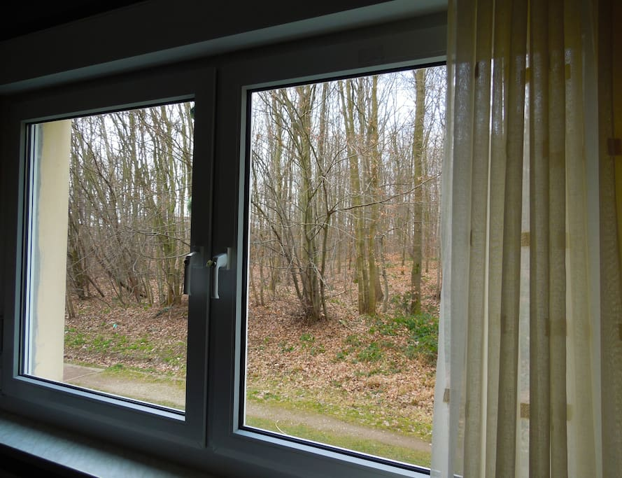 View out of the Living Room window/ Aussicht aus dem Wohnzimmer-fenster