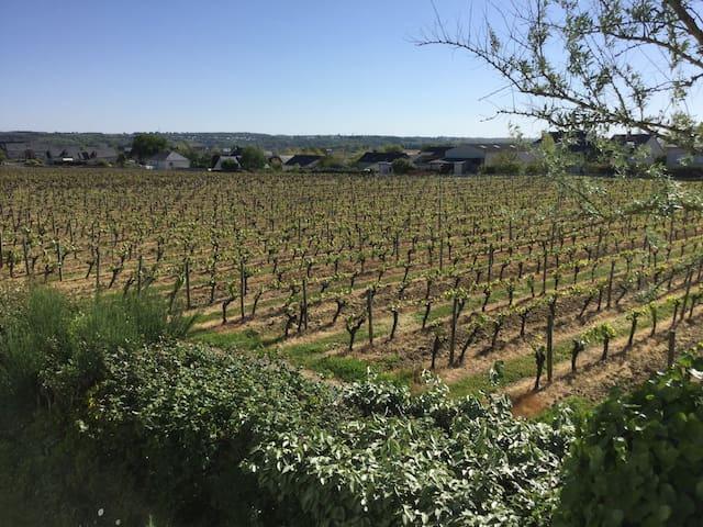 Chambre privée dans le vignoble - Saint-Lambert-du-Lattay - Casa