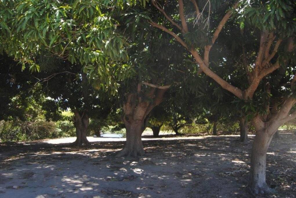 """Área de camping """"Sombra e manga fresca"""""""