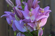Lilies from our garden.