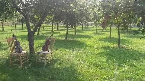 Le Jardin des Violoneux- Fiddles and Fruit