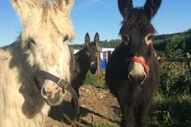 Our 3 donkeys with boat in background.