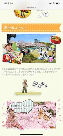还可以在樱花盛开的时候在草坪上野餐