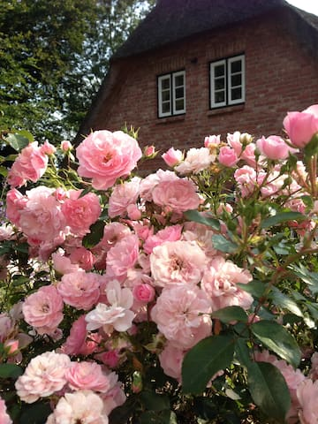 My Little Rose Cottage