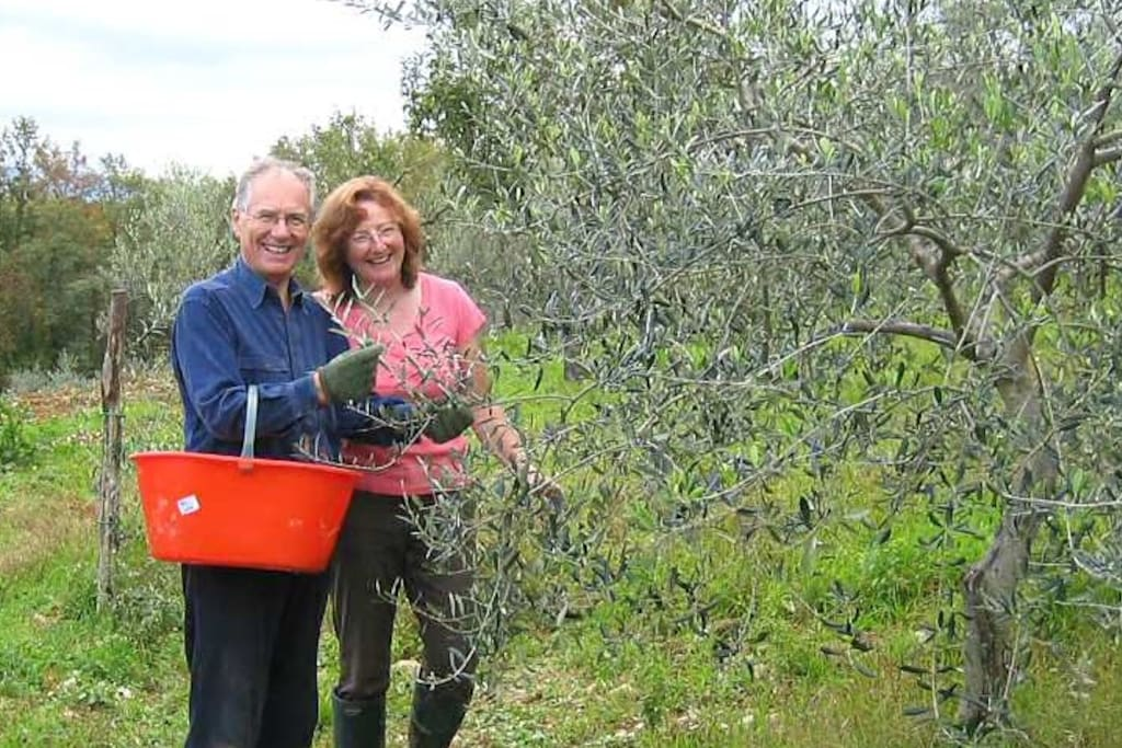 Owners Nigel and Deborah picking olives