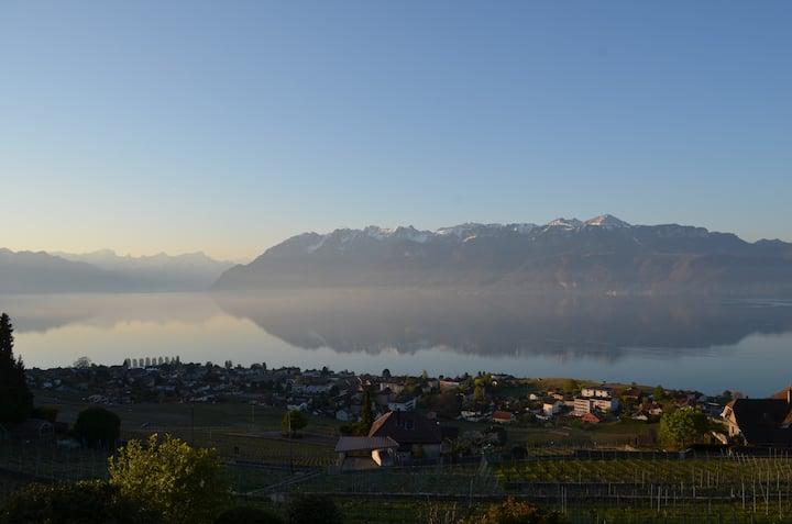 Vue splendide - Lavaux, Alpes et Léman !