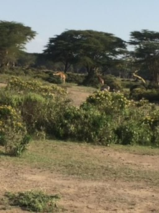 Home is 7 kilometers from Nairobi National Park