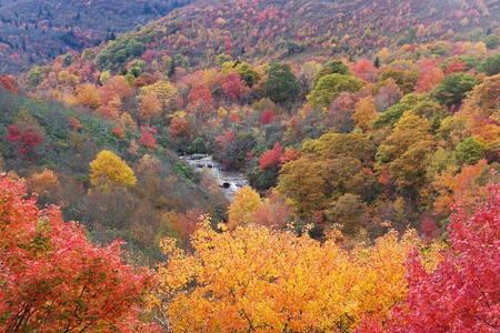 Beautiful Cozy Mountain Retreat - Sapphire