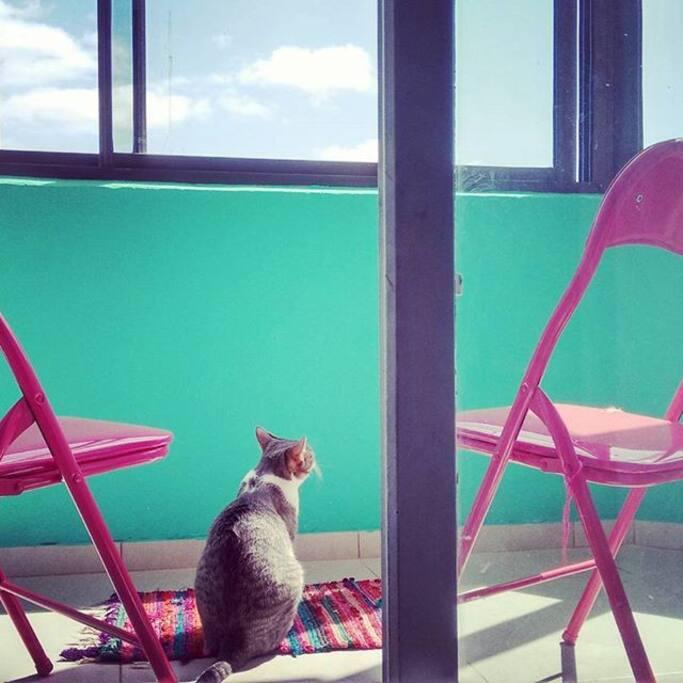 Feli en el balcón
