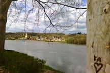 One of zilion views on Danube in Baracka, but this tree made it no 1