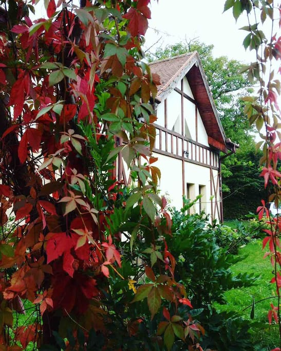 Magical autumn at our place.