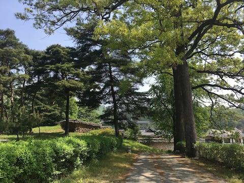 멋진 소나무 숲이 있는 집, 숲이 있는 家  [House in Forest]