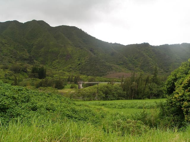 Spacious &Private! New 1 bedroom in Nuuanu!