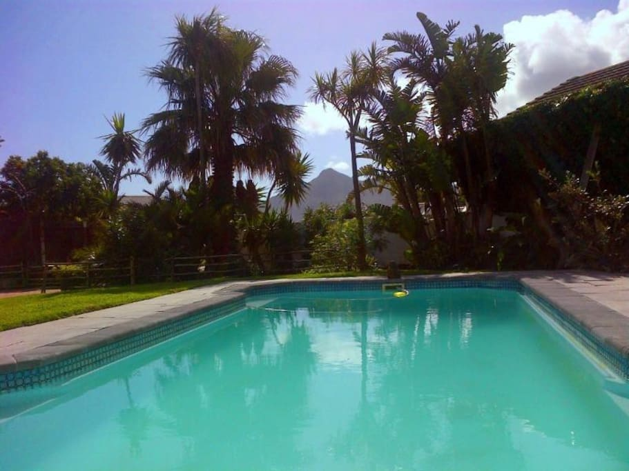 Tranquil garden with tropical plants and palm trees, very private