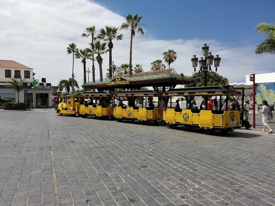 Tren a Loro Parque