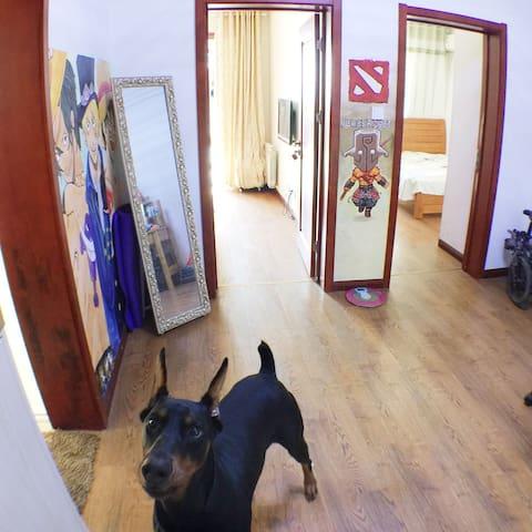 舒适房间和狗(Comfortable rooms and a dog) - Hefei