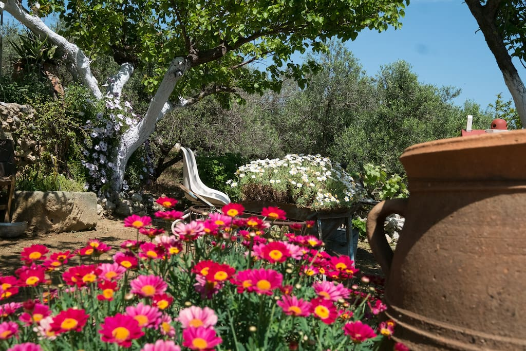 Great old olive trees surround this beautiful traditional family house. Many endemic flowers and herbs all around. Large outdoors and yards for total relaxation!