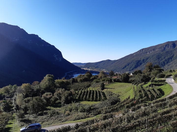 Wine Berry Views