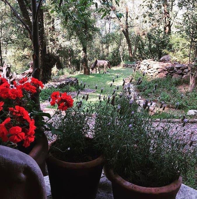 Vista de la entrada de la casa a una parte de los jardines.